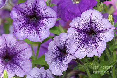 Advertising Archives - Purple Petunias by Judy Whitton