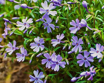 Phlox Mixed Media - Purple Phlox by Photos By  Cassandra