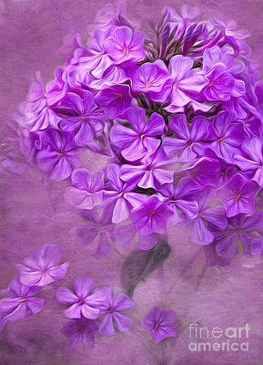Photograph - Purple Phlox by Lena Auxier