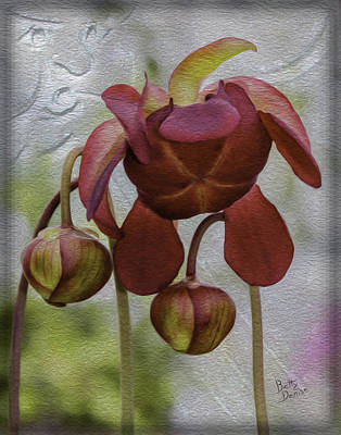 Art Print featuring the photograph Purple Pitcher Plant by Betty Denise