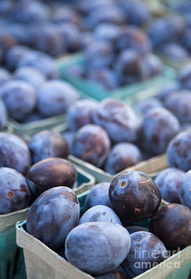 Plum Photograph - Purple Plums by Rebecca Cozart