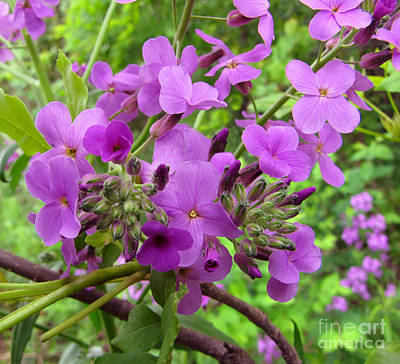 Purple Popping 2 Art Print by Cedric Hampton