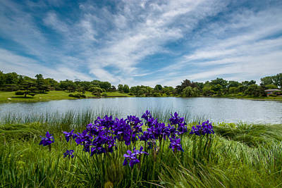 Photograph - Purple Posies By The Pond by Randy Scherkenbach