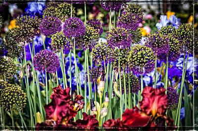 Purple Puffs And Iris Art Print