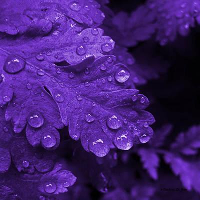Photograph - Purple Rain by Barbara St Jean