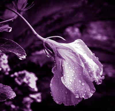 Photograph - Purple Rain by Christy Usilton