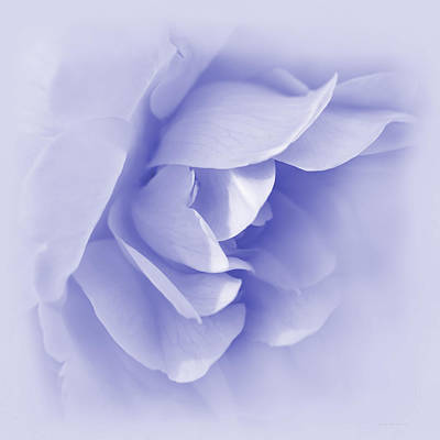 Photograph - Purple Rose Flower Tranquillity by Jennie Marie Schell