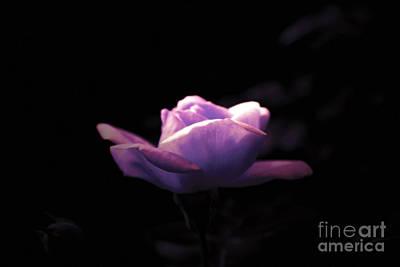 Purple Rose Original