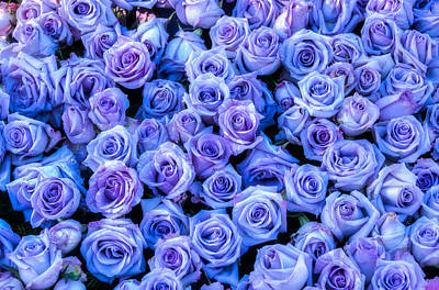 Photograph - Purple Roses Background by Connie Cooper-Edwards