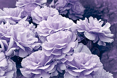 Photograph - Purple Roses In The Garden by Jennie Marie Schell