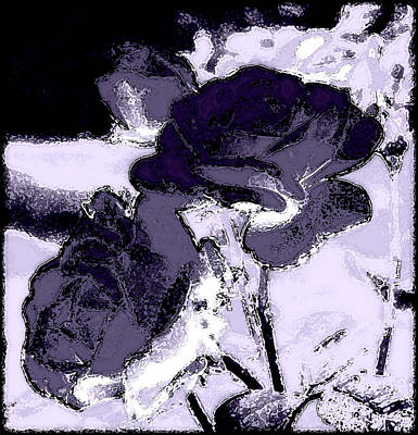 Photograph - Purple Roses by Kathy Sampson