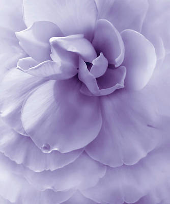 Lilac Time Photograph - Purple Ruffled Begonia Flower by Jennie Marie Schell