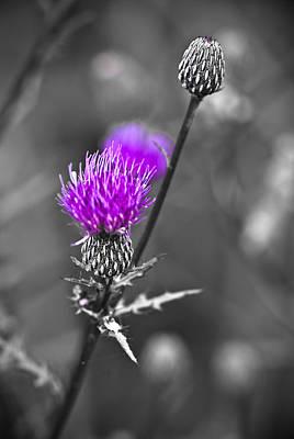 Flower Photograph - Purple by Samantha Eisenhauer