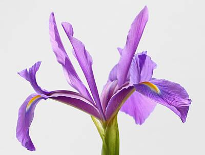 Intimate Garden Photograph - Purple Sensation by Juergen Roth