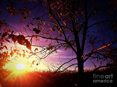 Photograph - Purple Skies And Walnut Trees by Garren Zanker