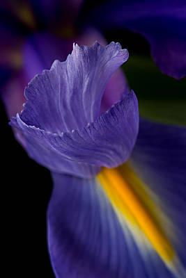 Photograph - Purple Splendor by Mary Jo Allen