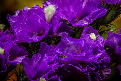 Photograph - Purple Statice by Ron Pate