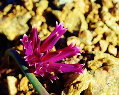 Flower Photograph - Purple Succulent Flower by David Lobos