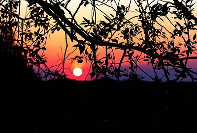 Photograph - Purple Sunset by Tara Lowry