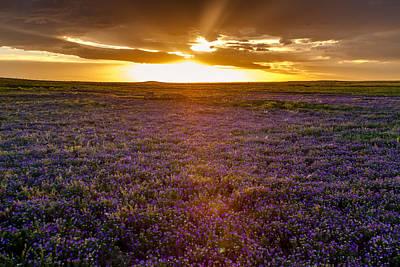 Purple Sunset Original by Teri Virbickis