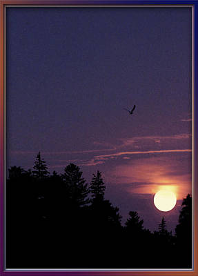 Art Print featuring the photograph Purple Sunset With Sea Gull by Peter v Quenter