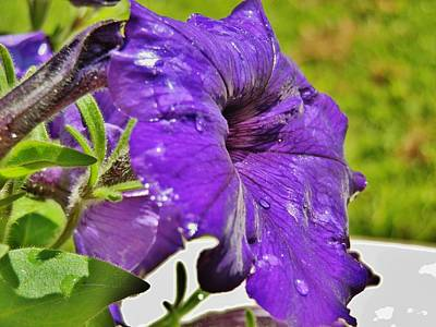 Photograph - Purple Taffeta by VLee Watson