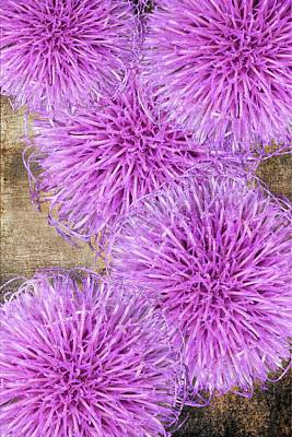 Purple Thistle - 2 Art Print