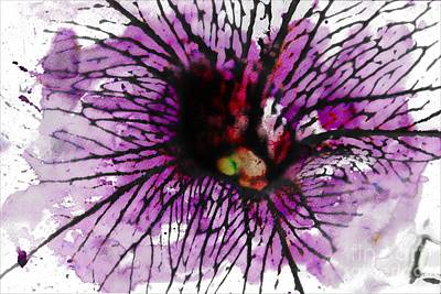 Photograph - Purple Throated Petunia by Audreen Gieger