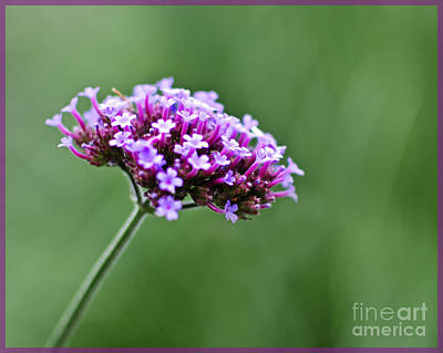 Art Print featuring the photograph Purple Top Flower by Maria Janicki