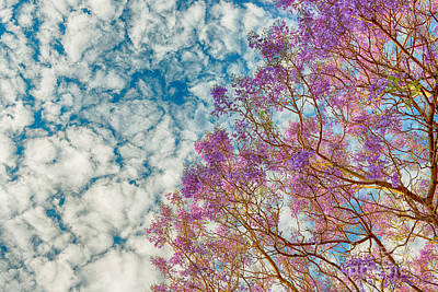 Photograph - Purple Tree by Yew Kwang