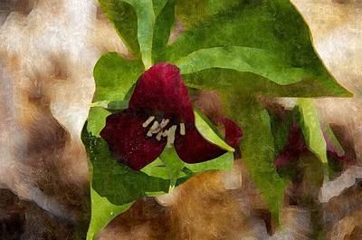 Photograph - Purple Trillium by Brenda Stone