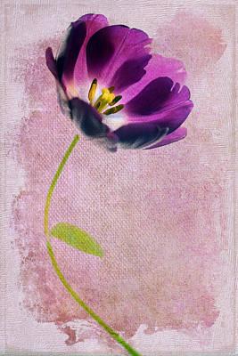 Open Photograph - Purple Tulip by Rebecca Cozart