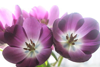 Andrea Grist Wall Art - Photograph - Purple Tulips  by Andrea K Grist