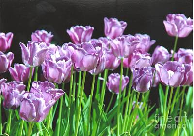 Photograph - Purple Tulips by Rod Ismay