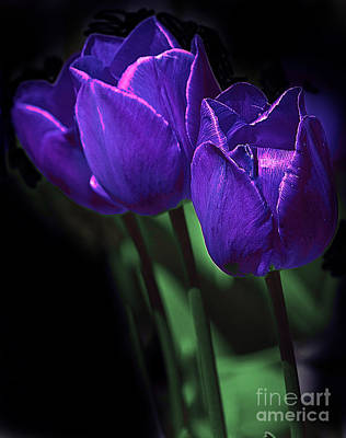 Outdoor Graphic Tees - Purple Tulips by Susan Buscho