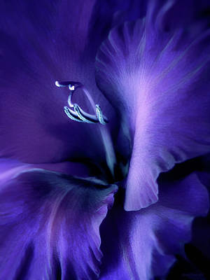 Purple Velvet Gladiolus Flower Art Print by Jennie Marie Schell