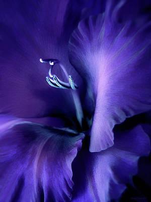 Food And Flowers Still Life - Purple Velvet Gladiolus Flower by Jennie Marie Schell