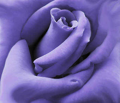 Floral Photos - Purple Velvet Rose Flower by Jennie Marie Schell