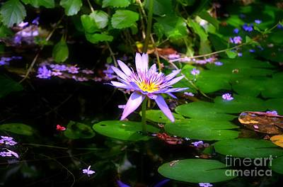Photograph - Purple Water Lilly by Peggy Franz