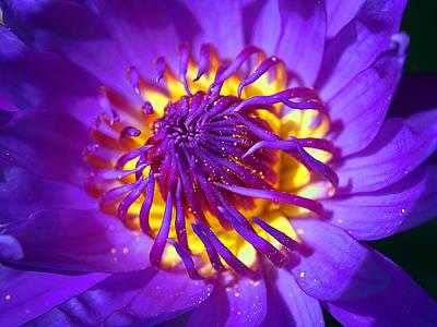 Justin Woodhouse Photograph - Purple Water Lily Macro by Kaleidoscopik Photography