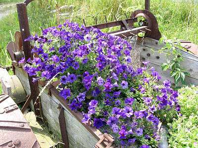 Wild Horse Paintings - Purple Wave Petunias in Rusty Horse Drawn Spreader by Conni Schaftenaar