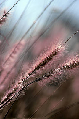 Photograph - Purple Waves Of Grain Fine Art Print by Penny Hunt