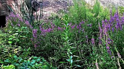 Photograph - Purple Weeds by William Norton