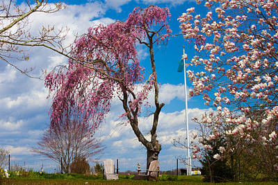 Photograph - Pink Weeping Willow Tree by Kirkodd Photography Of New England
