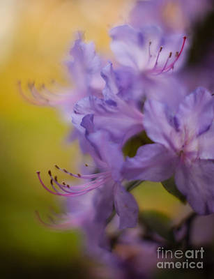 Impressionist Photograph - Purple Whispers by Mike Reid