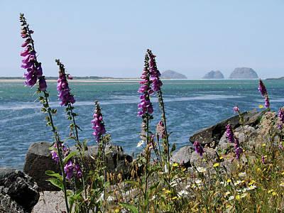 Photograph - Purple Wildflowers At Netarts Bay by Athena Mckinzie