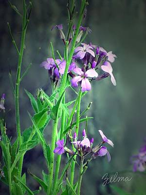 Purple Wildflowers Art Print by Zelma Hensel