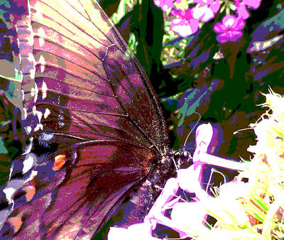 Photograph - Purple Wings by Walter Klockers