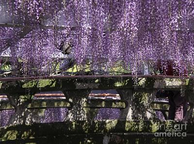 Purple Wisteria Over The Stone Bridge Original