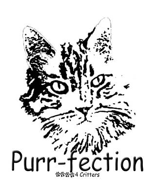 Photograph - Purr-fection by Robyn Stacey